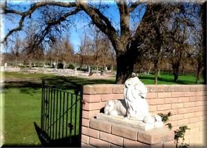 Graveyard Vineyards 1